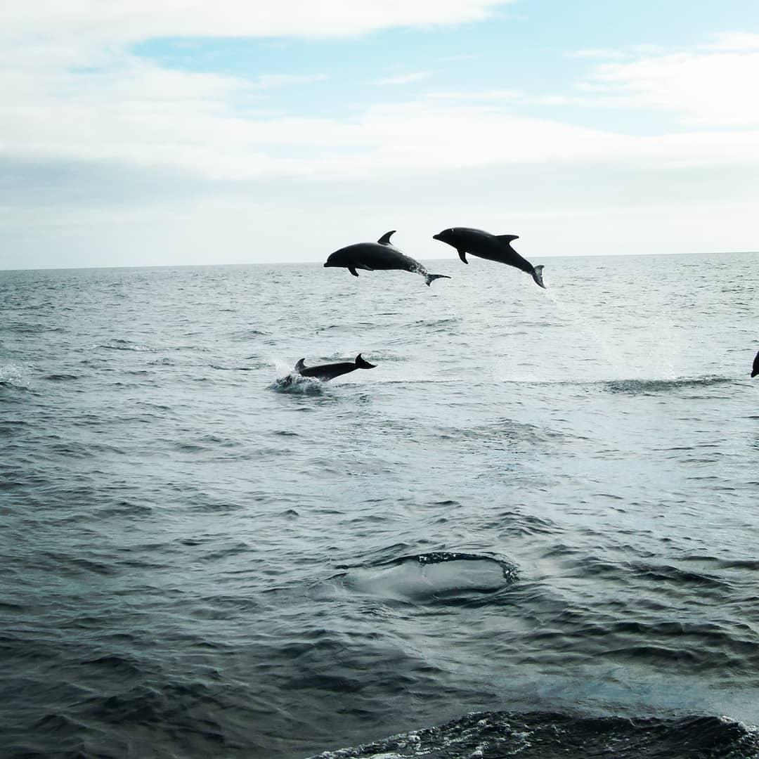 Ver delfines en Vigo