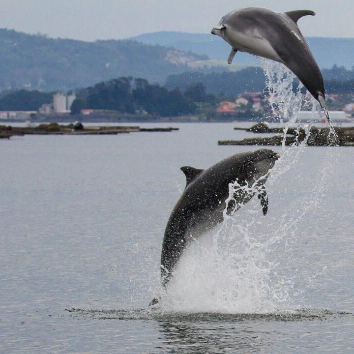 Arroaces Galicia